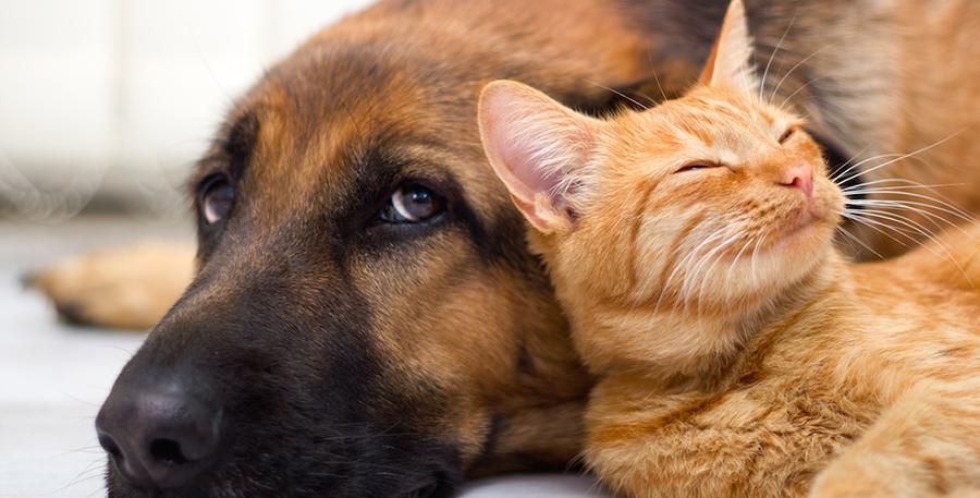 Animali ed altri amici